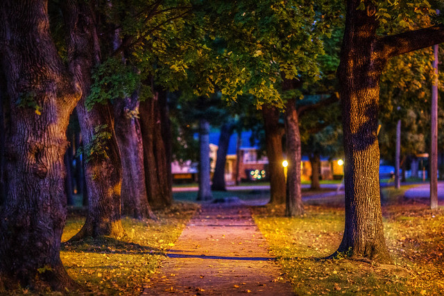 Early Evening Stroll