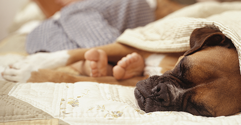 Kidney Disease In Dogs What Dog Owners Should Know