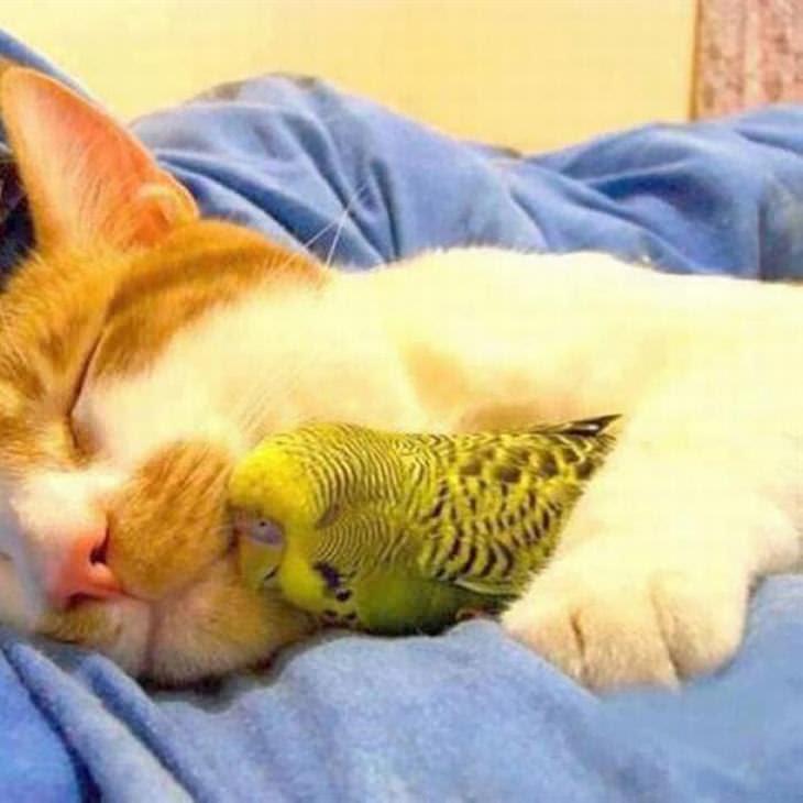 animais fofos dormindo juntos