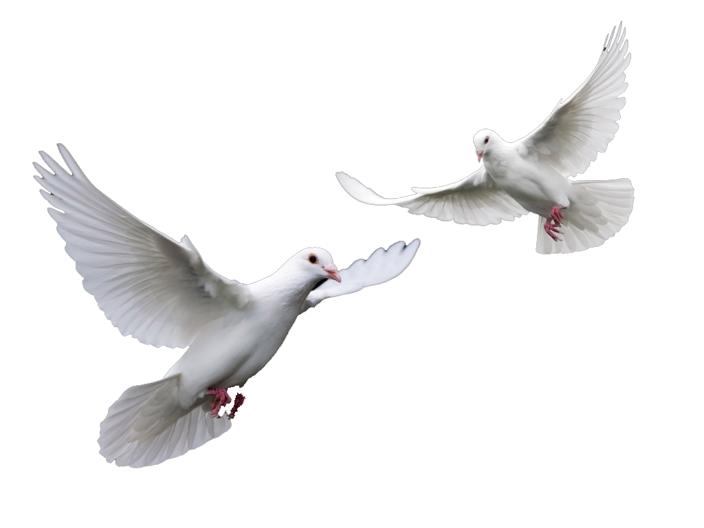http://acelebrationofwomen.org/wp-content/uploads/2013/02/Doves.png