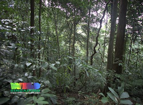 Bukit Timah Nature Reserve rainforest