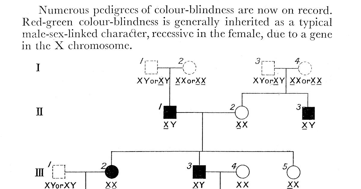 Inspiration 45 Of Colour Blindness Pedigree Chart Costtoborrowmoney