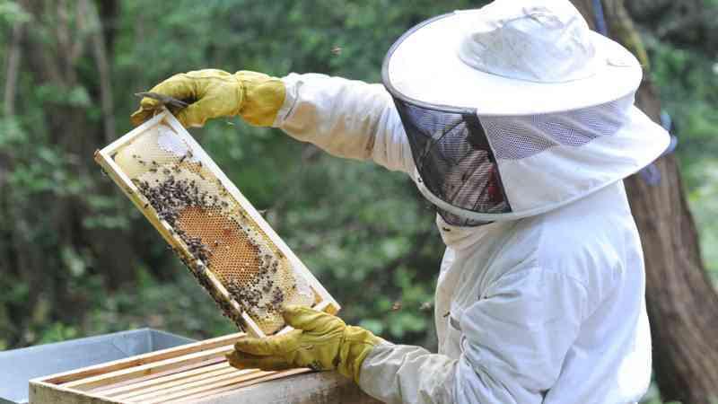 """Vilaboa y Barro acogen cursos de formación en """"apicultura moderna"""""""