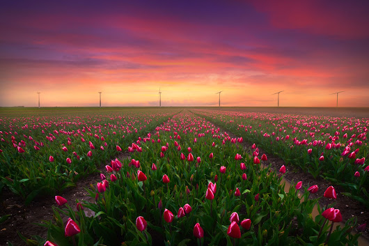 Netherlands Tulip Mania Drone and Photography Workshop