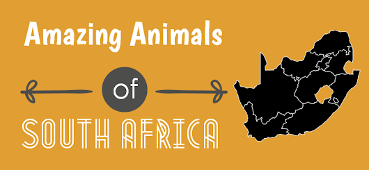 Big Seven and Other Animals of Africa - Infographic | HotelCluster.com Blog