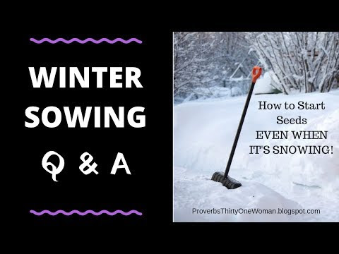 Winter Sowing Q & A