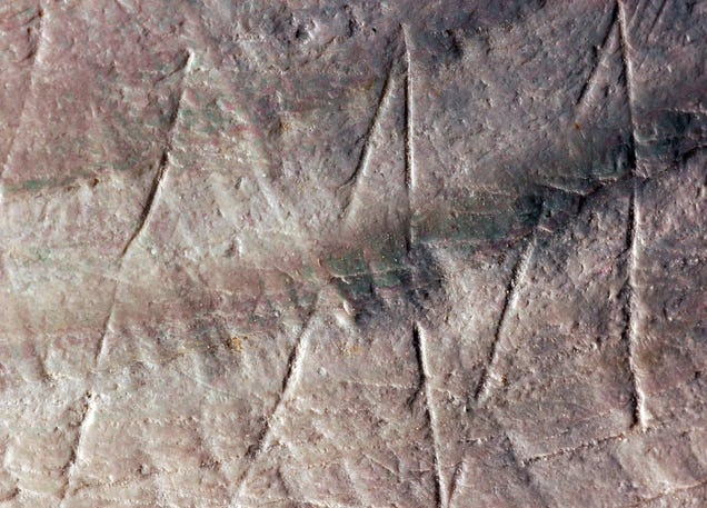 ​Engravings On A Shell Made 300,000 Years Before Humans Evolved