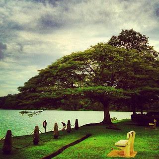 Lifescape. Jade Tree. #sgmemory #zd2
