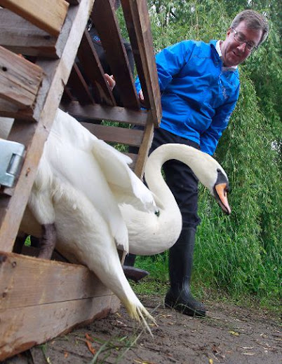 Despite Watson's love of them, Royal swans are a waste of money
