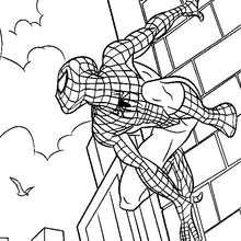 Dibujos Para Colorear Spiderman Pintar E Imprimir 40 Dibujos De Spidy