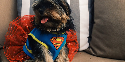 Dog Halloween Costumes Are The Shih Tzu