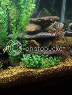 Cichlid-Forum • Changing Mbuna Tank decorations