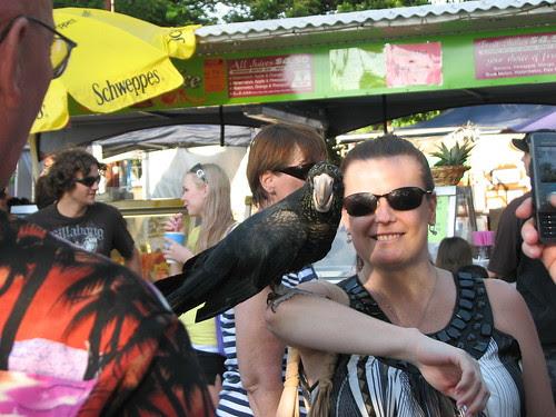 Parrot,Mindil Beach Market,