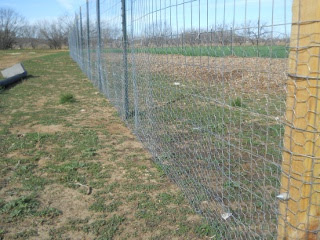 Garden 2 Fencing with Chicken Wire