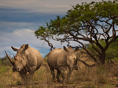 Act Now to Save Rhinos | World Wildlife Fund