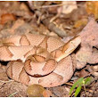 Copperhead Snakes and Your Pets - Professional Dog Walking and Pet Sitting in Kennesaw GA