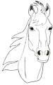 Pferde Malvorlagen kostenlos - Ausmalbilder Pferdemotive