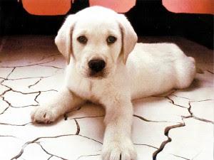 perierga.gr - Η ράτσα του σκύλου μας αντανακλά το χαρακτήρα μας!
