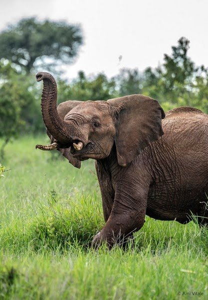 Give $1 to 'Elephants Need You' and I will match your donation