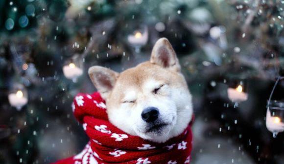 Fotos de cachorros 17