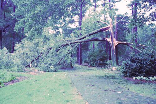Broken Oak by bahayla