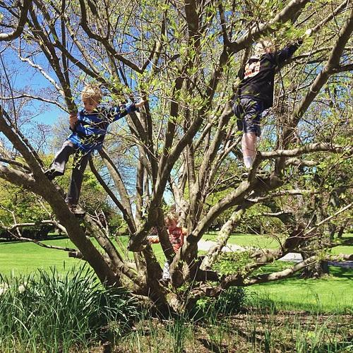 """""""Recess""""...all three climbing the tree"""