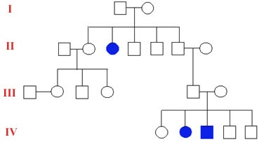 biology genetics sex linked traits in Mount Isa