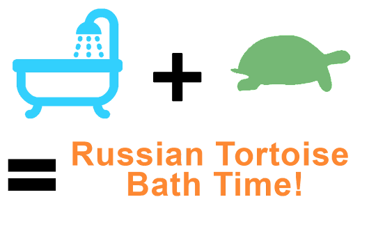How to Bathe a Russian Tortoise -