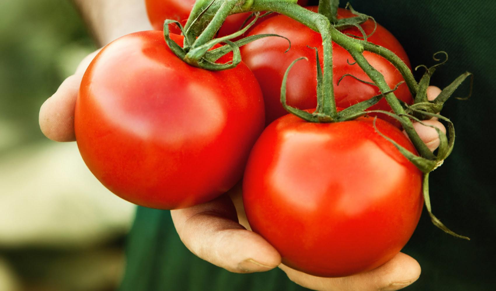 Tomate-tomate