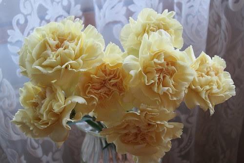 Helmikuun kukat by Anna Amnell