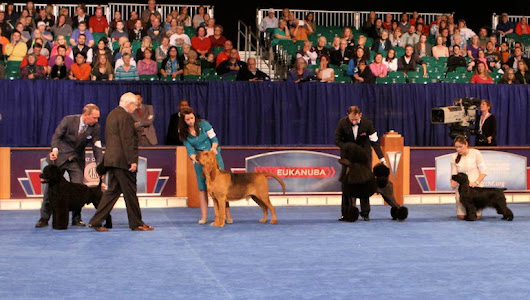 Judging Program Now Available for 2015 AKC/Eukanuba National Championship Dog Show Dec. 12-13
