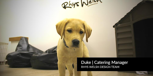 Web Design Cardiff - Newest Member - Office Dog Duke