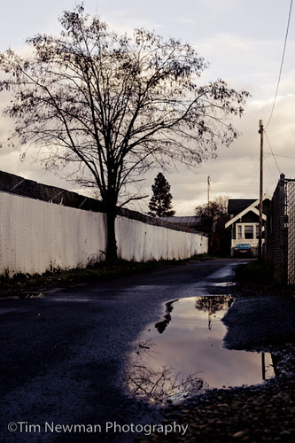 The Tree and the Puddle and the Fence