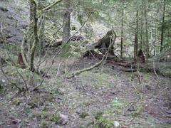 Area Around the Camp Site