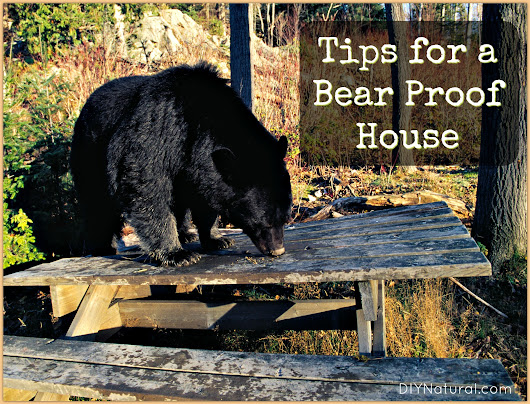 How to Ensure You Have a Bear Proof House, Naturally