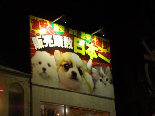 cute_animals_sign