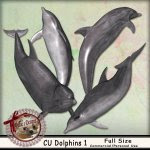 DC_CU Dolphins 1