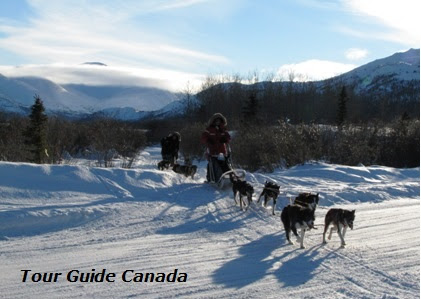 Dog Sled Trips in Canada