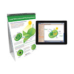 NewPath 2026453 Learning Photosynthesis & Cellular Respiration Flip Chart with Online Multimedia Lesson