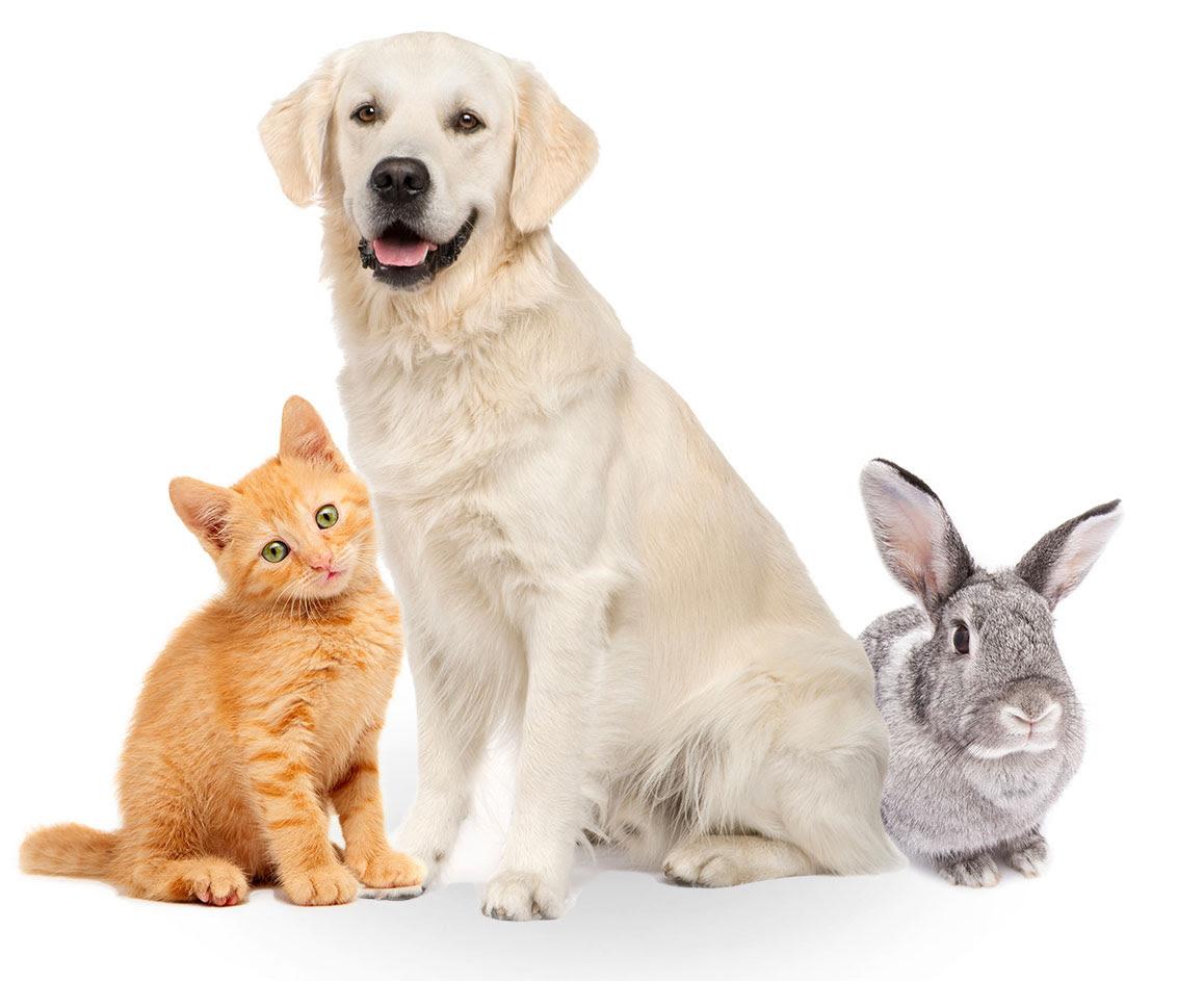 Pet Insurance  Get your pet insurance through Pets at Home