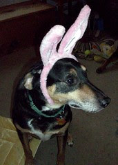 Tut_bunny_411e