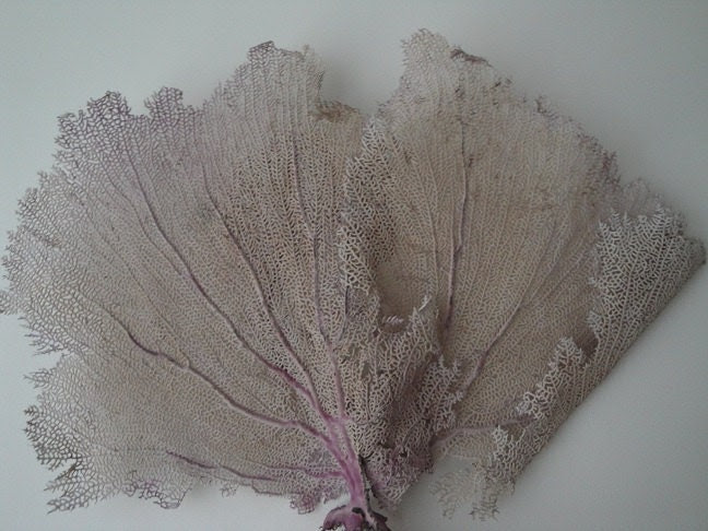 """18"""" x 12"""" Pink Sea Fan Fish Tank Seashells Reef Coral"""