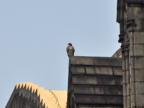Fledgling on the Nave