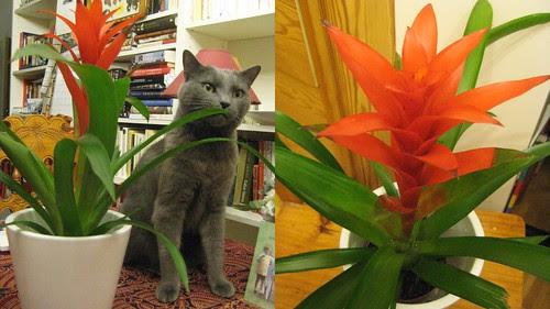 Timanttiananas ja kissa