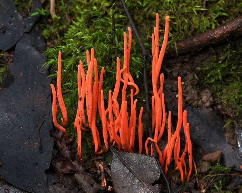 Fungi09 Самые красивые грибы в мире