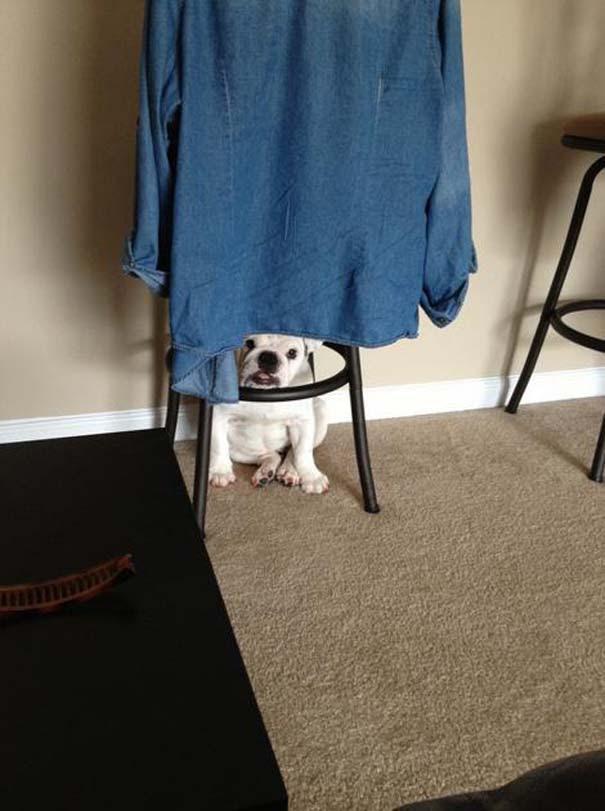 Όταν τα ζώα παίζουν κρυφτό (18)