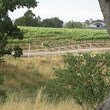 11 new AVAs proposed for Paso Robles' vineyards - Paso Robles Daily News