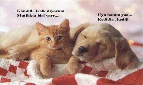 en komik kedi resimleri