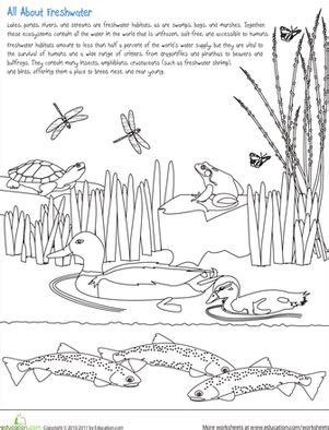 color  freshwater habitat worksheet educationcom