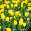 Top Ten Spring Flower Spots In Central Park - Central Park